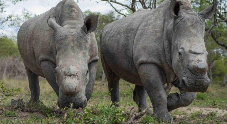 rescued-rhinos@hesc