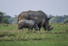 rhino stock photo. Source: Pixabay