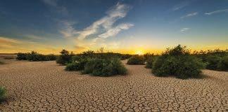 drought karoo south africa