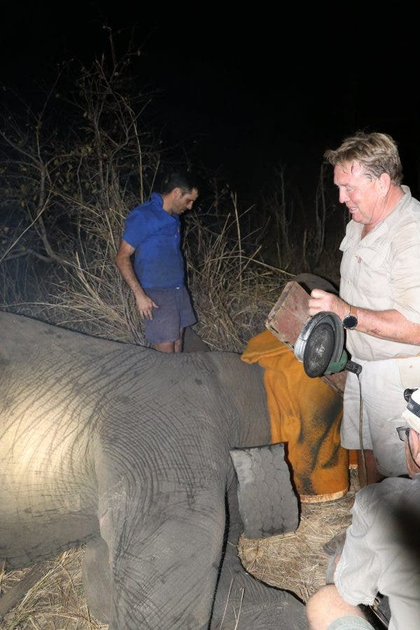 elephant tyre rescue zimbabwe