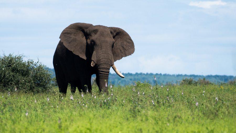 kruger national park elephant poachers arrested