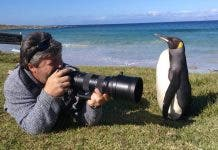 king-penguin-cape-point--photographer-w2south-africa-2