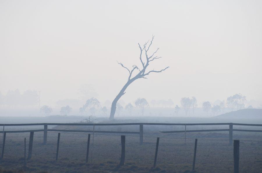 A dead tree is seen in a field shrouded by bushfire smoke near Glen Innes