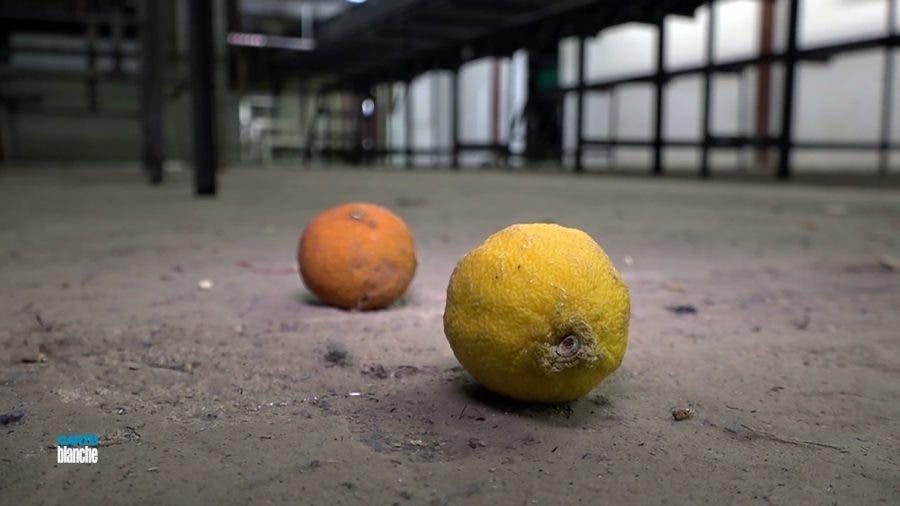 Citrus Farm - Carte Blanche