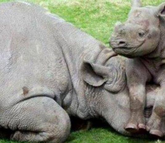 game reserve employees arrested for rhino poaching south africa