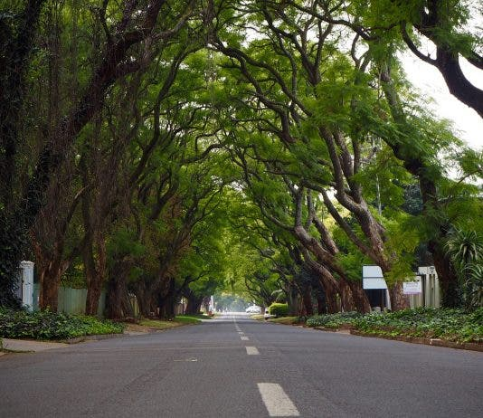 south africa joburg green shoots trees