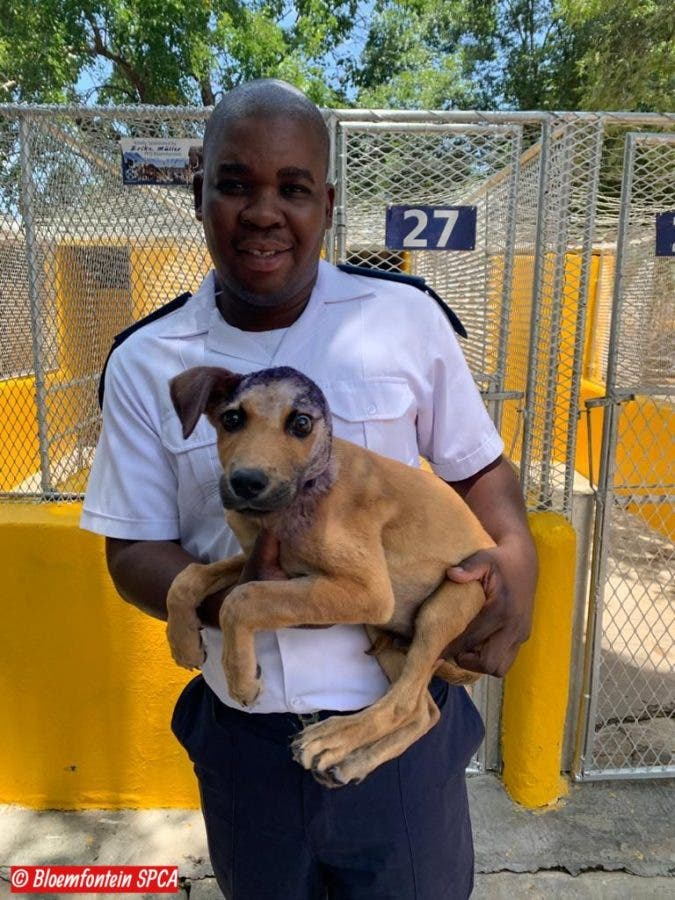 dog survives fireworks attack bloemfontein south africa