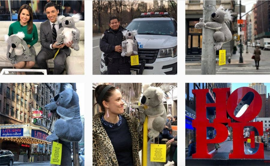 koalas in new york city