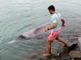 whale-rescue-struisbaai-south-africa