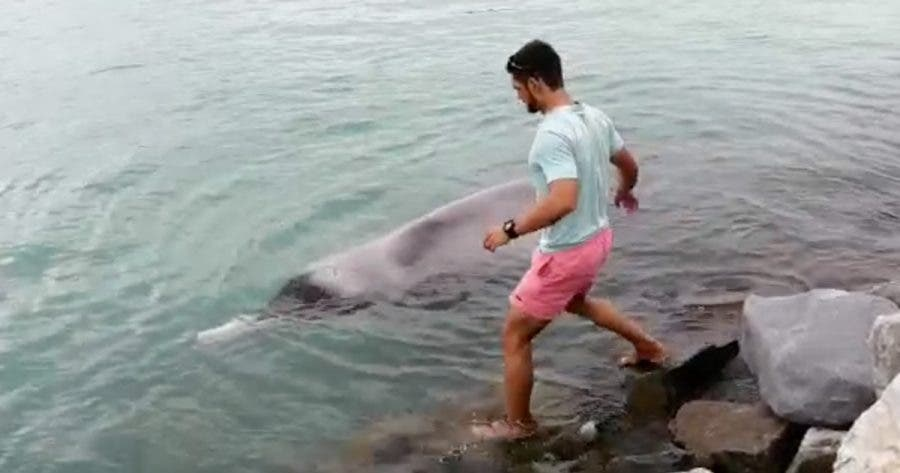 whale-rescue-struisbaai-south-africa