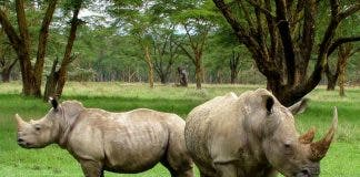 rhino poacher arrested south africa