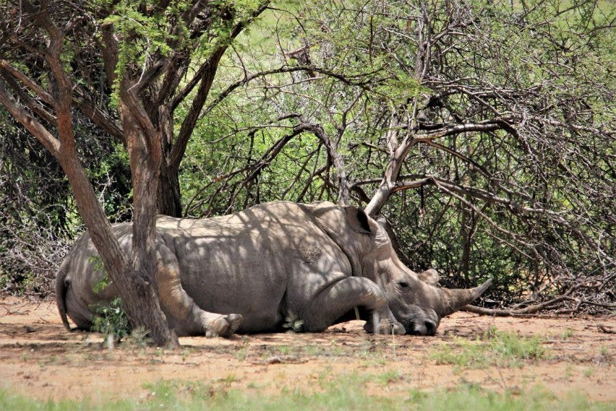 rhino poaching south africa arrests