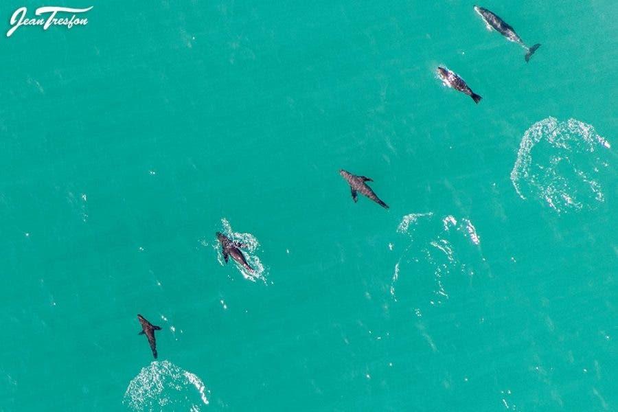 Seals Dolphin