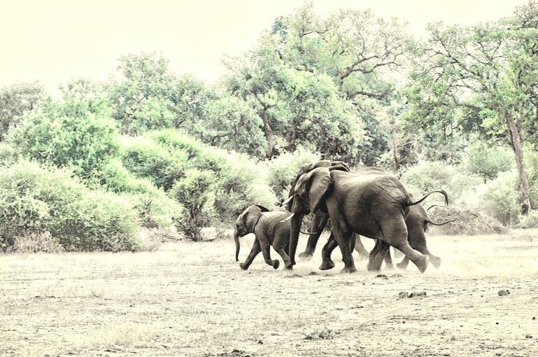 elephants kill man conservationist kzn south africa