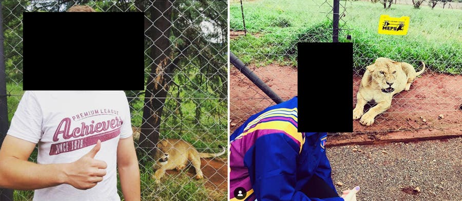 lions kill woman south africa