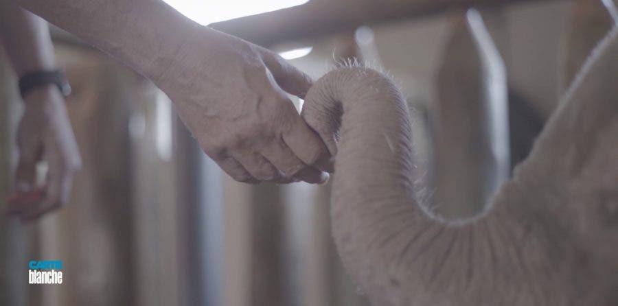 meeting rare white albino elephant south africa
