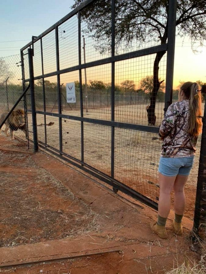 swane van wyk near lion