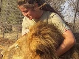woman killed by lions south africa