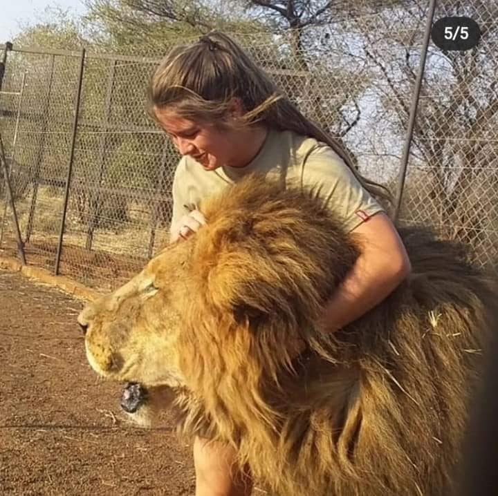 swane van wyk with lion south africa killed
