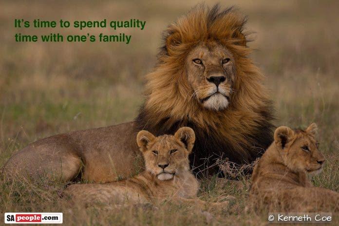 africa wildlife corona uplifting photos