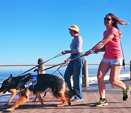 dog walk cape town