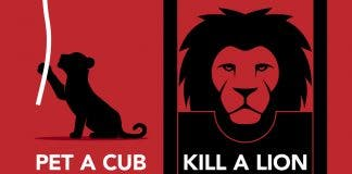 why do we pet a lion cub
