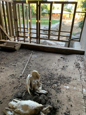 bloemfontein zoo animals