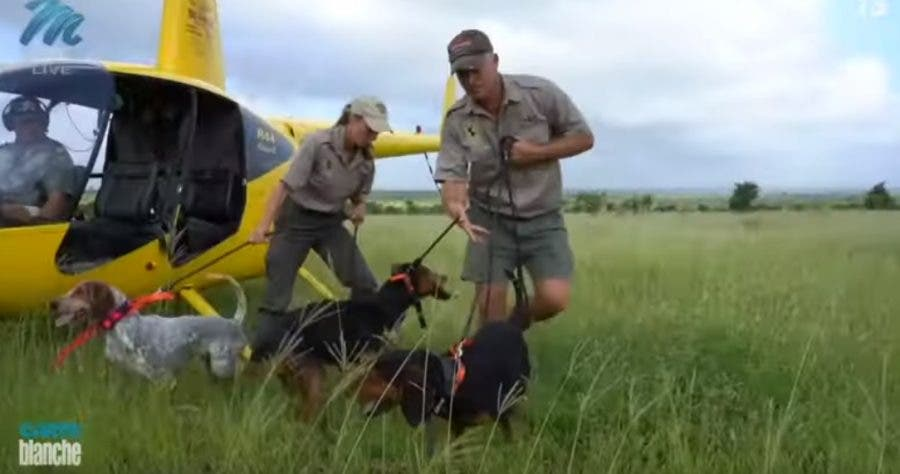 carte blanche hounds dogs poaching