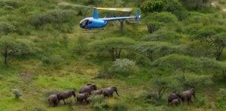 elephant herd face culling kzn south africa