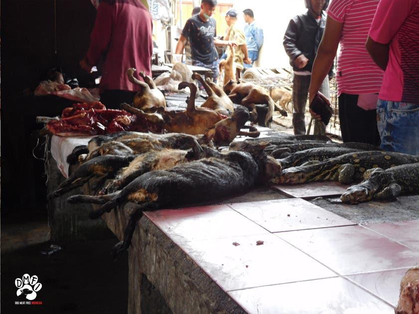 Dogs Wildlife Wet Market in Indonesia