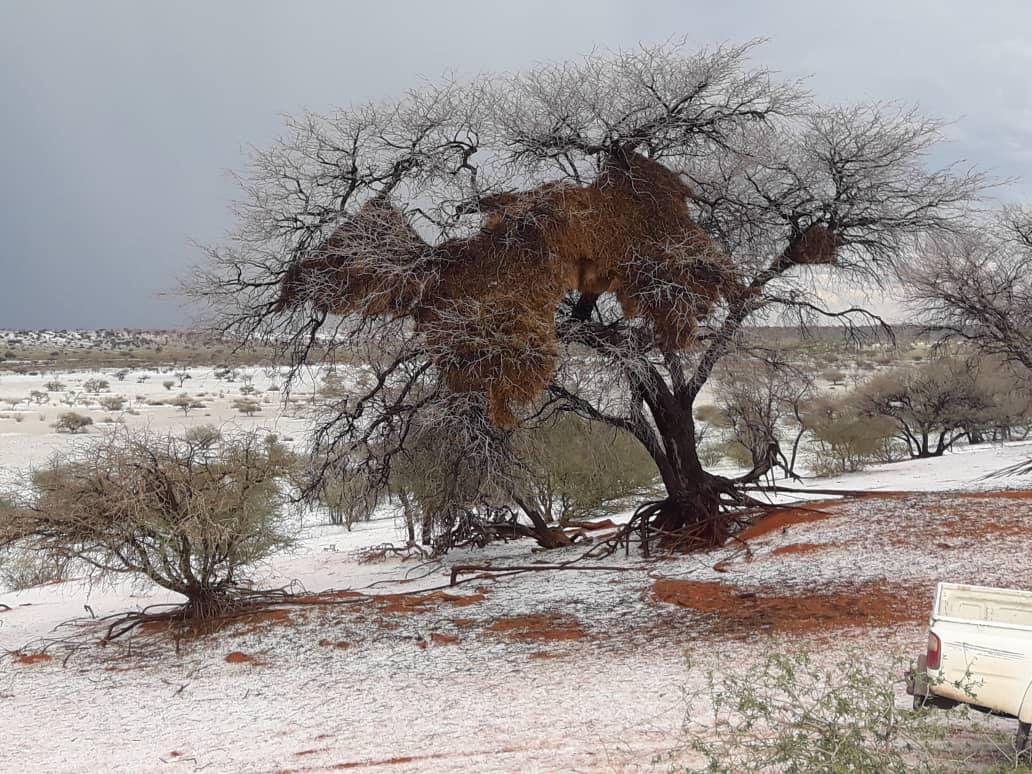 kalahari desert dunes covered ice