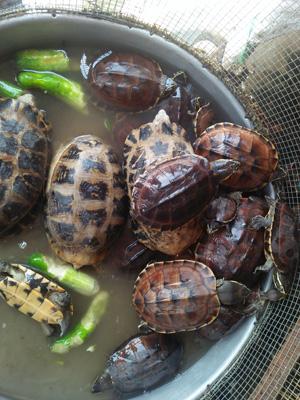 Wildlife wet markets in Vietnam