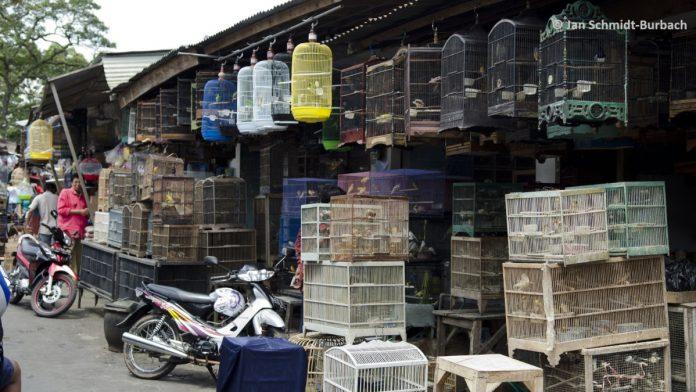 wildlife market china calls ban