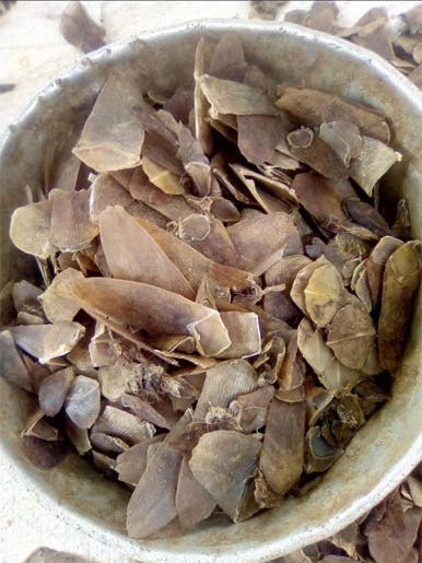 Pangolin scales on sale at a wildlife market in Liberia