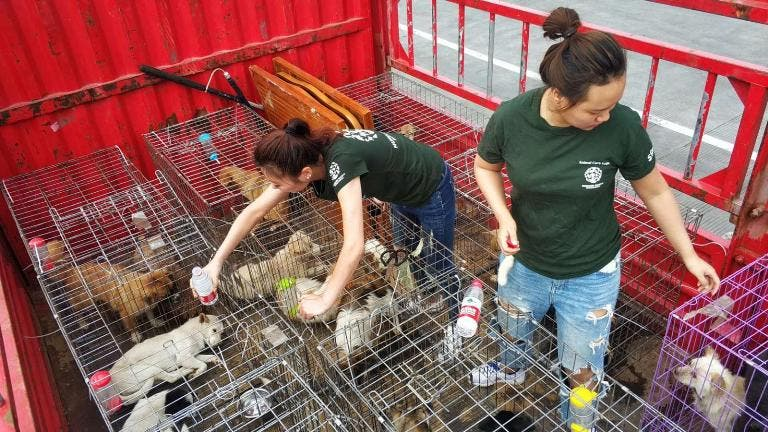 Zhuhai china city bans eating dogs cats wildlife
