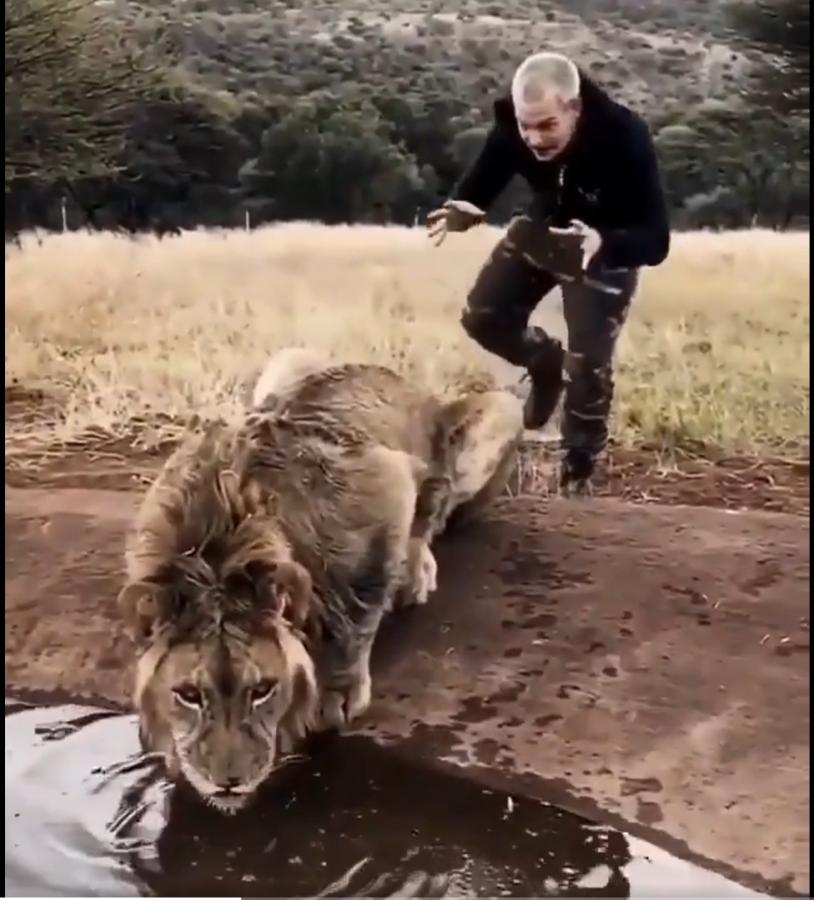 lion dean schneider