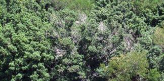 Trees disease Harold Porter Botanical Gardens