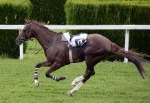 horse-racing-euthanasia south africa pix
