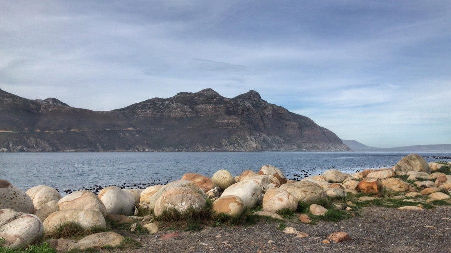 thousands dolphins hout bay south africa cape town