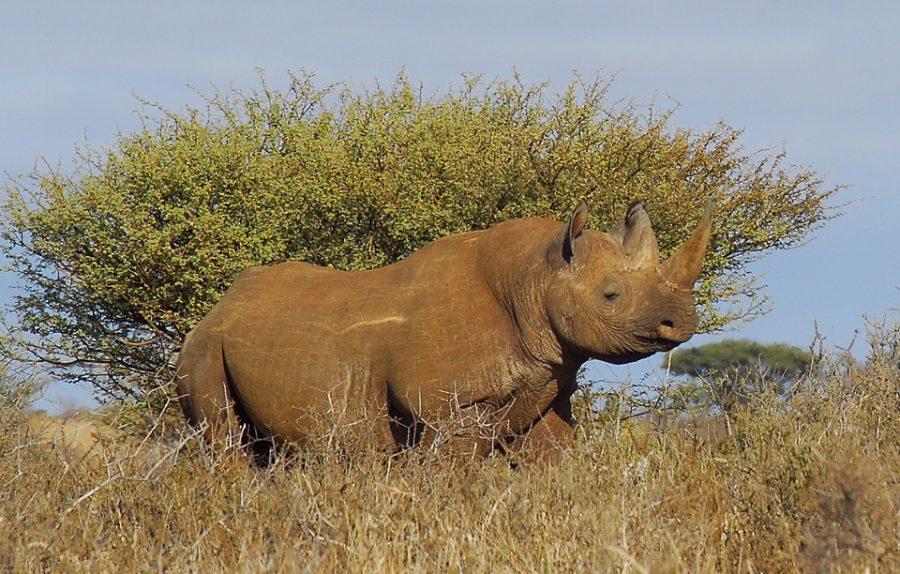 wildlife-south-africa-covid-19 rhino