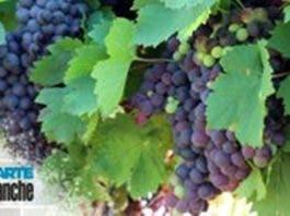lockdown winelands south africa suffer