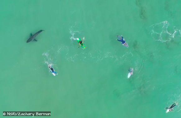 shark plettenberg bay