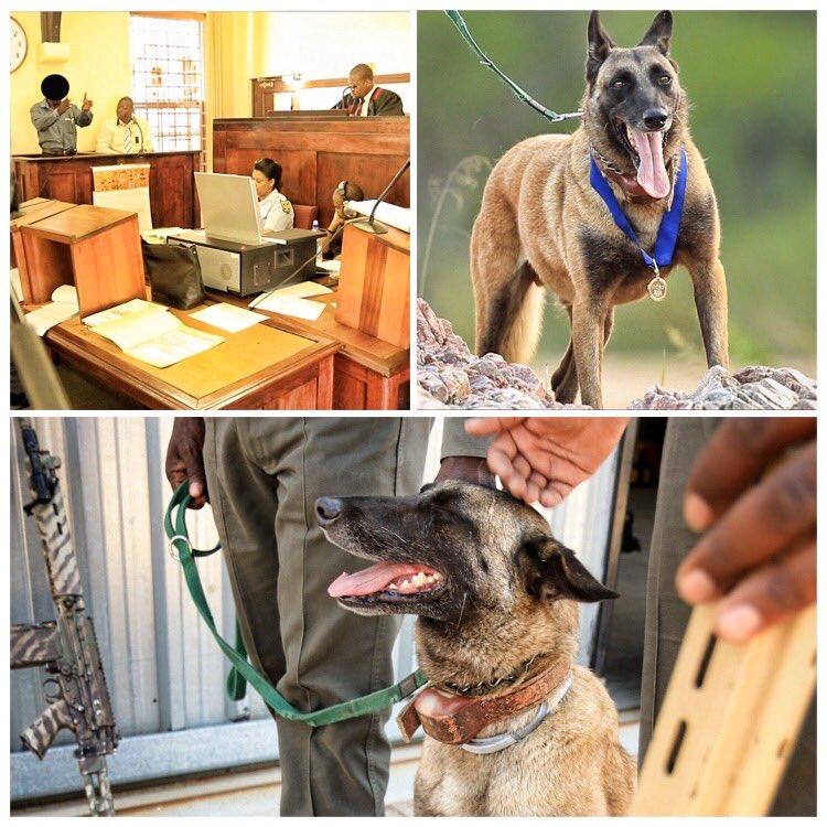 anti poaching hero dog killer kruger