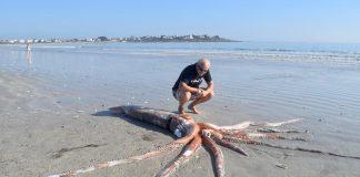 giant squid st helena beach 2