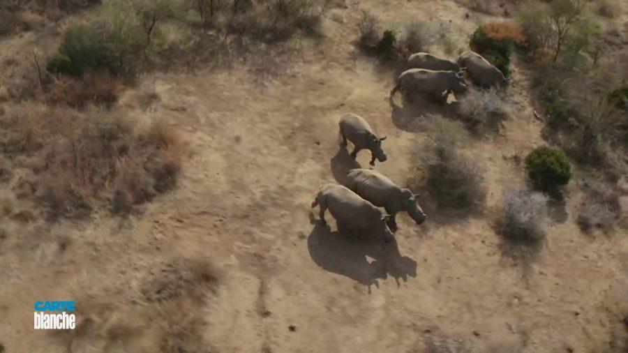 rescuing rhino from poaching 2