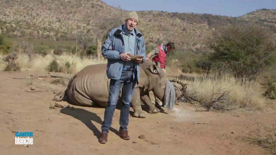 rhino dehorning sa