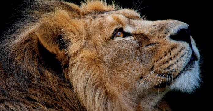 unfair-game-book-south-african-lion-farms