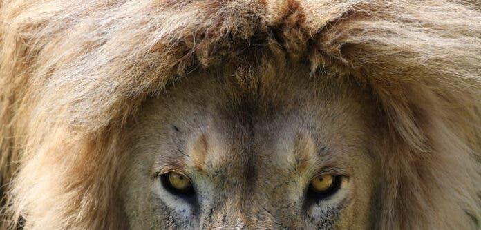 Wildlife Experts Spurn Invite
