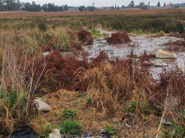 raw sewage kempton park gauteng