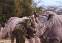 rhino ranger africa wildlife